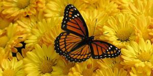 Cánh bướm - Truyện ngắn ý nghĩa