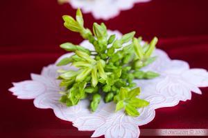 Sự tích hoa Thiên Lý - Truyện cổ tích loài hoa hay nhất thế giới