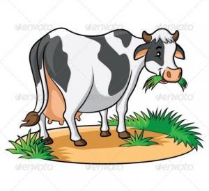 Mất trộm bò - Truyện cười vui nhộn hài hước