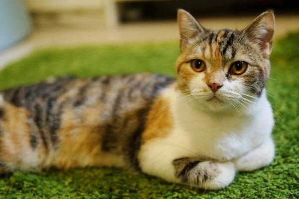 Truyện Con Mèo không biết vâng lời - Truyện ngụ ngôn Hungary hay nhất