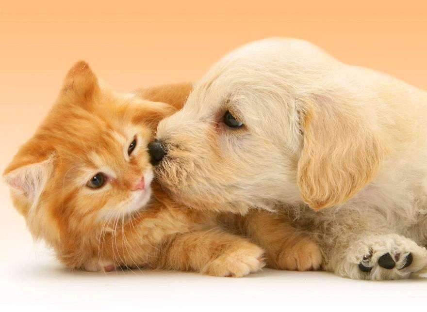 sự tích chó mèo ghét nhau