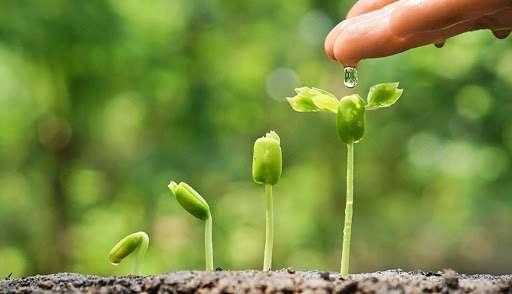 gieo hạt yêu thương