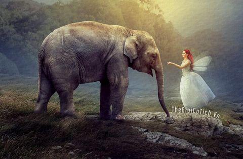Truyện cổ tích Nàng tiên trong ngà voi - Truyện cổ tích dân tộc Cơ Tu cho bé