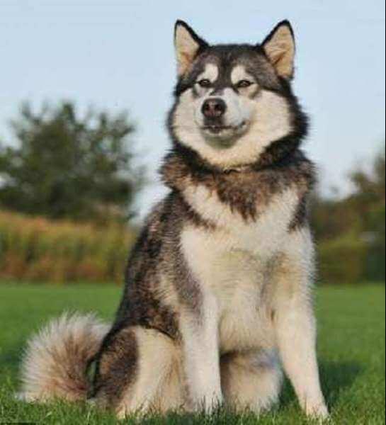 Chó thần